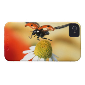 ladybird on flower 2 iPhone 4 covers