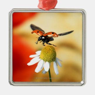 ladybird on flower 2 christmas ornament