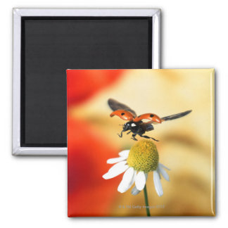 ladybird on flower 2 magnet