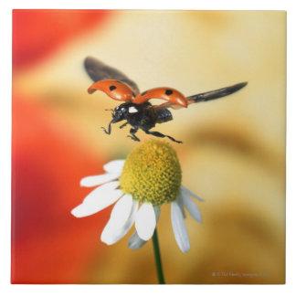 ladybird on flower 2 tile