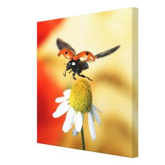 ladybird on flower canvas print