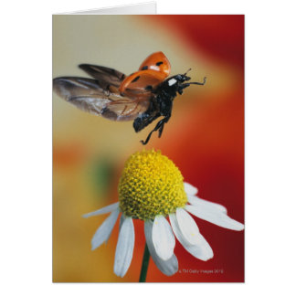 ladybird on flower card