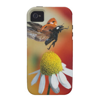 ladybird on flower Case-Mate iPhone 4 cases