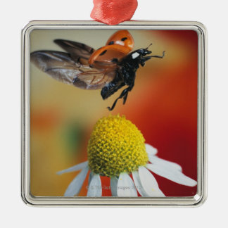 ladybird on flower christmas ornament