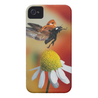 ladybird on flower iPhone 4 Case-Mate case
