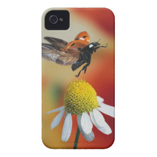 ladybird on flower iPhone 4 Case-Mate cases