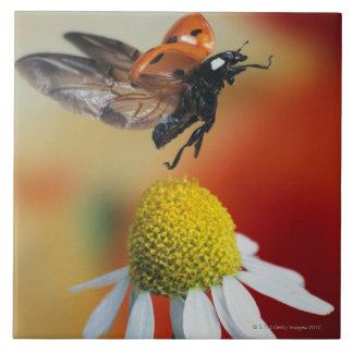 ladybird on flower tile