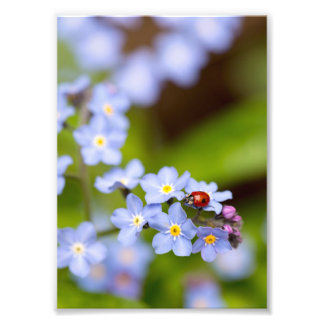 "Ladybird on Forget-me-not Print 5x7"" Photo Art"