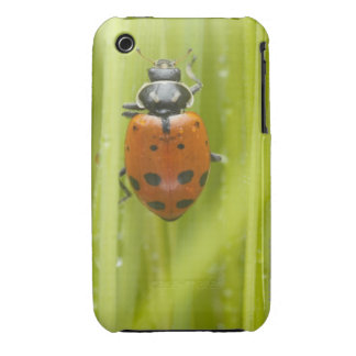 Ladybird on grass, close-up Case-Mate iPhone 3 cases