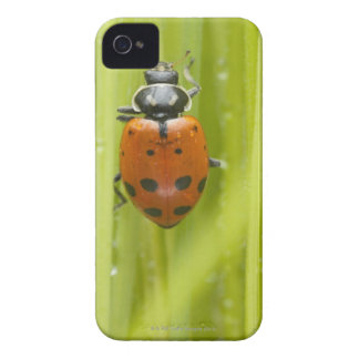 Ladybird on grass, close-up iPhone 4 Case-Mate cases