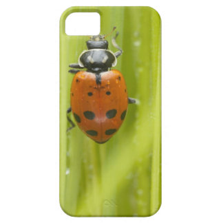 Ladybird on grass, close-up iPhone 5 case