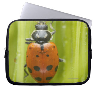 Ladybird on grass, close-up laptop sleeve