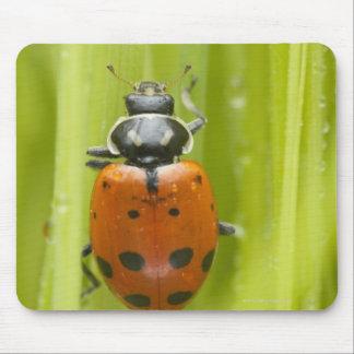 Ladybird on grass, close-up mouse mat