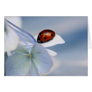 Ladybird on hydrangea card