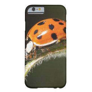 Ladybird on leaf,Ladybug on leaf Barely There iPhone 6 Case