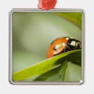 Ladybird on leaf,Ladybug on leaf Christmas Ornament