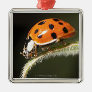 Ladybird on leaf,Ladybug on leaf Christmas Ornament