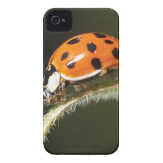Ladybird on leaf,Ladybug on leaf iPhone 4 Case-Mate Cases