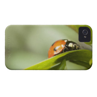 Ladybird on leaf,Ladybug on leaf iPhone 4 Covers
