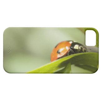 Ladybird on leaf,Ladybug on leaf iPhone 5 Case