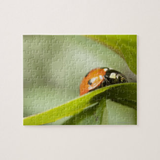 Ladybird on leaf,Ladybug on leaf Jigsaw Puzzle