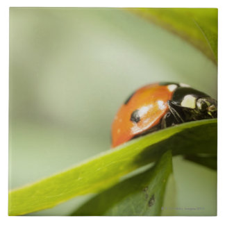 Ladybird on leaf,Ladybug on leaf Large Square Tile