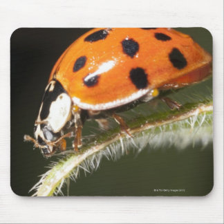 Ladybird on leaf,Ladybug on leaf Mouse Mat