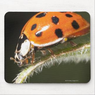 Ladybird on leaf,Ladybug on leaf Mouse Pad