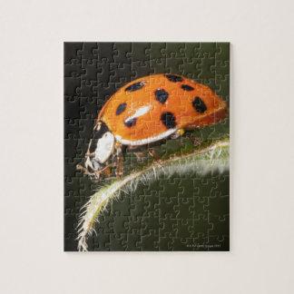 Ladybird on leaf,Ladybug on leaf Puzzle