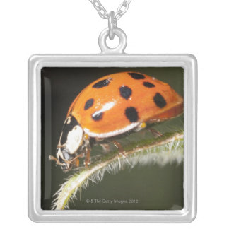 Ladybird on leaf,Ladybug on leaf Silver Plated Necklace