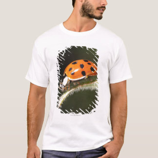 Ladybird on leaf,Ladybug on leaf T-Shirt