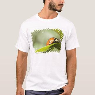 Ladybird on leaf,Ladybug on leaf T-Shirt
