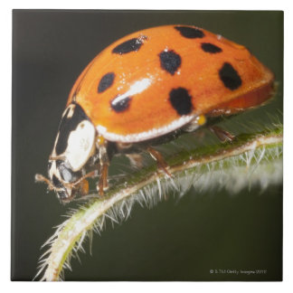 Ladybird on leaf,Ladybug on leaf Tile