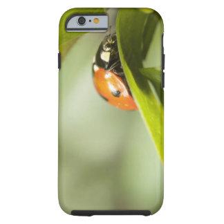 Ladybird on leaf,Ladybug on leaf Tough iPhone 6 Case