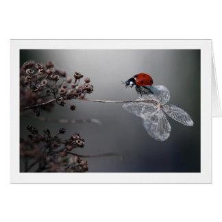 Ladybird on old hydrangea card