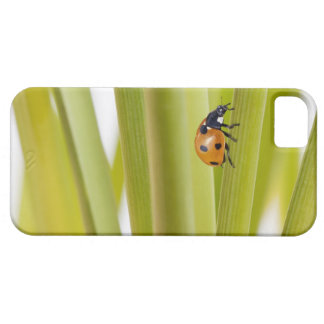 Ladybird on plant stems case for the iPhone 5