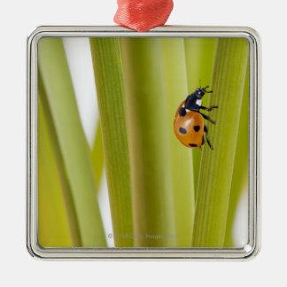 Ladybird on plant stems christmas ornament