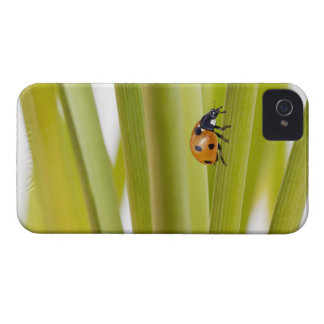 Ladybird on plant stems iPhone 4 Case-Mate case
