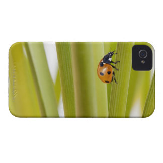 Ladybird on plant stems iPhone 4 cases