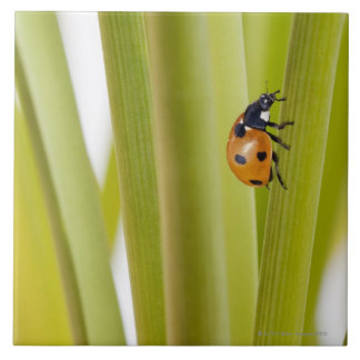 Ladybird on plant stems large square tile
