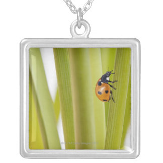 Ladybird on plant stems silver plated necklace