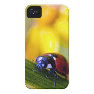 Ladybird on Ragwort flowers Blackberry Bold case