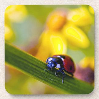Ladybird on Ragwort flowers cork coaster set