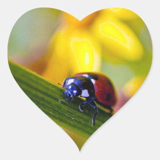 Ladybird on Ragwort flowers heart stickers