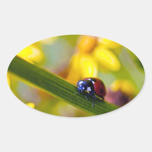 Ladybird on Ragwort flowers oval stickers