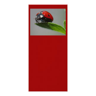 Ladybird Personalised Rack Card