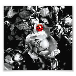 Ladybird Photo Print