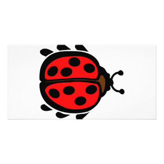 Ladybird Picture Card