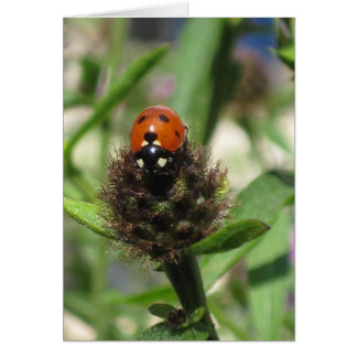 Ladybird - Portrait Greeting Card 5'' x 7''