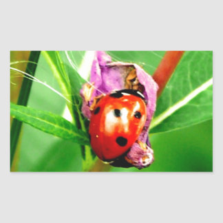 Ladybird Rectangular Sticker